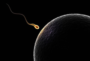 getty_rm_photo_of_sperm_approaching_ovum